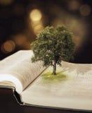 Träd i bibeln. arkivbild