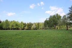 Träd i blå himmel för fält arkivbilder