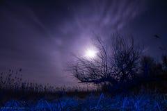 Träd - i blått ljus på nattfullmåneglorien, stjärnor och mystycla Arkivbild