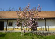 Träd i blom framme av huset Arkivbild