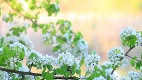 Träd i blom på en solig dag lager videofilmer