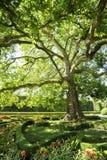 Träd i blommaträdgård i Kromeriz Arkivbild