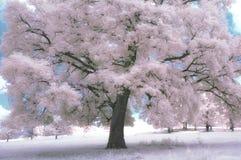 Träd i blomning med blå himmel i vår Arkivbild