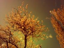 Träd i blomning med blommor över himlen Arkivbilder