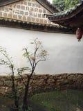 Träd i borggården Arkivfoton