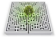 Träd i borttappat i labyrint Royaltyfri Fotografi