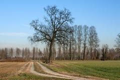 Träd i bygden i vinter Royaltyfri Fotografi