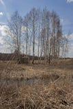 Träd i bygdlandskap arkivfoto