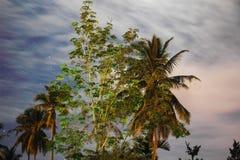Träd i bynattsikten Royaltyfria Foton