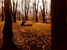 Träd i cementary Arkivfoton