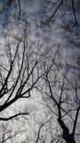 Träd i Central Park New York arkivbild