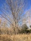 Träd i Chaoyang Parkp Royaltyfri Foto