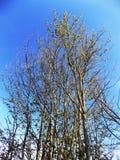 Träd i Crookham, norr Northumberland, England Fotografering för Bildbyråer