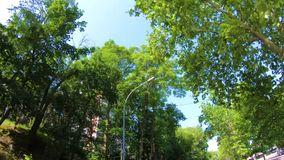 Träd i de blåa himlarna för stad, medan köra stock video