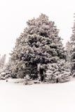 Träd i de schweiziska fjällängarna under ett tungt snöfall - 7 arkivfoto