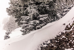 Träd i de schweiziska fjällängarna under ett tungt snöfall - 8 Arkivfoton