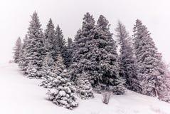 Träd i de schweiziska fjällängarna under ett tungt snöfall - 6 arkivbild