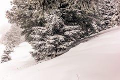Träd i de schweiziska fjällängarna under ett tungt snöfall - 10 Royaltyfri Bild