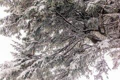 Träd i de schweiziska fjällängarna under ett tungt snöfall - 19 Fotografering för Bildbyråer