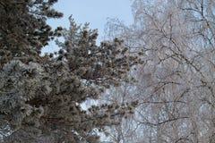 Träd i den frostiga snön arkivfoton