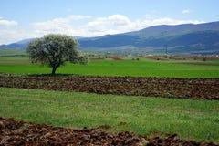 Träd i den plogade jorden Arkivbild