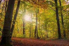 Träd i den tidiga hösten Arkivbild
