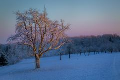 Träd i det första morgonljuset på en kall vinterdag royaltyfri bild