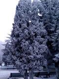 Träd i det insnöat staden Arkivbild