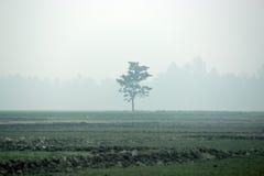 Träd i det mitt- fältet Arkivfoto