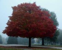 Träd i dimma på höstdag Arkivbilder