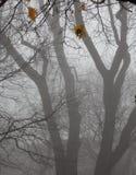 Träd i dimma. Sista höstblad. Royaltyfri Bild