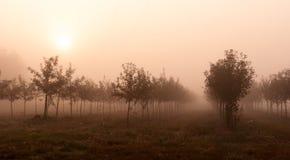 Träd i dimman Royaltyfria Bilder
