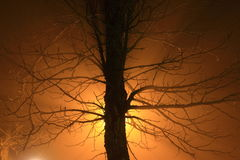 Träd i dimman med panelljuset Arkivbild