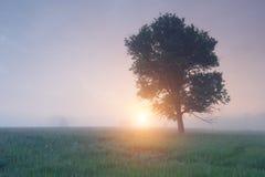 Träd i dimman på soluppgång Royaltyfria Bilder