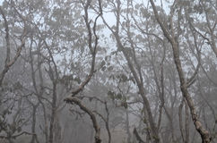 Träd i dimmig skog Royaltyfri Foto