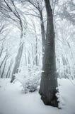 Träd i djupfryst skog med snö Royaltyfria Bilder