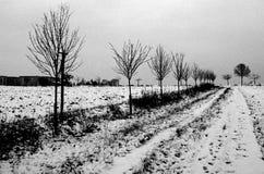 Träd i dold bygd för snö Arkivbilder
