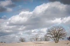 Träd i dynlandskap på en solig vinterdag med moln royaltyfri bild