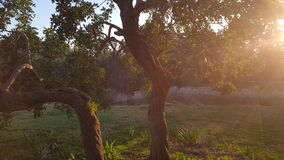 Träd i eftermiddagljuset Royaltyfri Fotografi