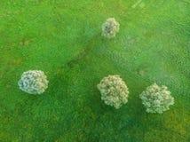 Träd i en äng Royaltyfri Foto