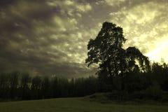 Träd i en äng nedanför en lynnig himmel Arkivbild