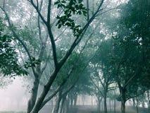 Träd i en bana i en lekplats royaltyfri fotografi