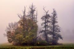 Träd i en dimmig sår Arkivbilder