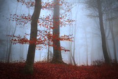 Träd i en dimmig skog Royaltyfri Fotografi