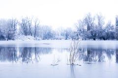 Träd i en djupfryst sjö Royaltyfri Fotografi