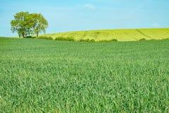 Träd i en grön äng Royaltyfri Fotografi
