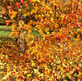 Träd i en höst Fotografering för Bildbyråer