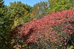 Träd i en kulle i Montreal Kanada royaltyfri fotografi