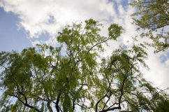 Träd i en molnig dag Royaltyfri Bild