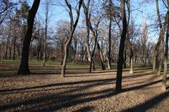 Träd i en parc Royaltyfri Bild